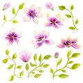 Watercolor Painting Magnolia Blossom Flower Wallpaper Decoration Art. Hand Drawn Isolated Closeup Tree Floral Illustration. Decora Stock Photos - 106625433