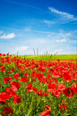 Wonderful Blue Sky And Splendid Field Of Poppies. Stock Images - 10702974