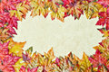 Fall Leaves Background Stock Photo - 10724300