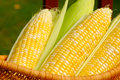 Ears Of Sweet Corn Royalty Free Stock Images - 10746409