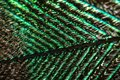 Peacock Feather Stock Photography - 107589362