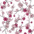 Seamless Pattern With Pink Blooming Tree Branches, Apple Tree Or Royalty Free Stock Images - 107736569