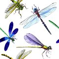Exotic Dragonfly Wild Insect Pattern In A Watercolor Style. Royalty Free Stock Images - 107792449