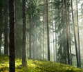 Forest Stock Images - 10793614