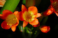 Orange Flowers Stock Photography - 1082352
