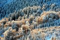 Detail View At Colorful Trees From Jested Mountain Peak. Cold Winter Morning Forest, Czech Republic. Stock Image - 108027971