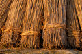 Reed Bundles Stock Image - 10819511