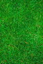 Texture Of Green Grass On The Whole Frame Stock Photos - 108305663