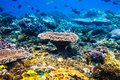 Tropical Wildlife: Corals And Fish. Sea Life In Indian Ocean. Royalty Free Stock Photo - 108385455