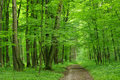 Forest Royalty Free Stock Image - 10842306