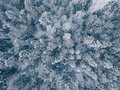 Aerial View Of Winter Forest Covered In Snow And Frost. Royalty Free Stock Photography - 108453947