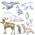 Collection, Set Of Watercolor Cute Polar Animals Illustrations Royalty Free Stock Image - 108635596