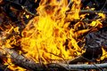Burning Of Thin Dry Grass During Incendiary Fire, Close-up Royalty Free Stock Image - 108669366
