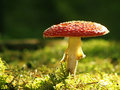 Fungus Royalty Free Stock Photography - 10887287