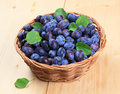 Freshly Picked Damson Plums Stock Images - 10901074