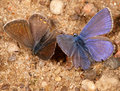 Two Moths Royalty Free Stock Photography - 10911707