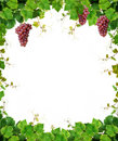 Grapevine Frame With Wine Grapes Royalty Free Stock Images - 10918029