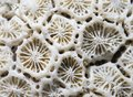 White Coral Texture Macro Photo. Dry Sea Coral Structure Closeup. Abstract Macro Background. Royalty Free Stock Photography - 109109657