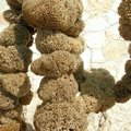 Sponges In Lampedusa Royalty Free Stock Photography - 109140127