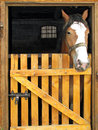 Horse In The Stable Door Royalty Free Stock Image - 10939776