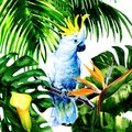 Beautiful White Cockatoo, Colorful Big Parrot In Jungle Rainforest, Exotic Flowers And Leaves, Watercolor Illustration Stock Images - 109423554