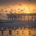 Sunrise Over A Fishing Pier And Flying Birds Royalty Free Stock Images - 109483669