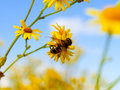 Bee On Flower Royalty Free Stock Photography - 10951587