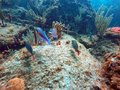 Fish Swimming Among Coral Off Pompano Beach Stock Photos - 109519713