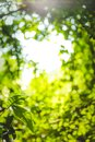Beautiful Natural Green Leaf And Abstract Blur Bokeh Light Background Stock Photo - 109519850
