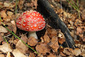 Toadstool Stock Photography - 10980482