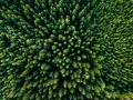 Aerial Top View Of Summer Green Trees In Forest In Rural Finland. Royalty Free Stock Photo - 109829235