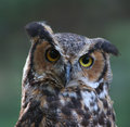 Great Horned Owl Royalty Free Stock Photography - 10992447