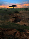 Lonely Tree Stock Images - 1101064