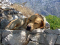 Pupy Asleep Royalty Free Stock Images - 1102609