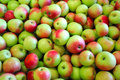 Green And Red Apples Stock Photography - 11018692
