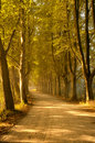 Autumn Trees Lining Road Royalty Free Stock Images - 11020749