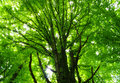 Green Forest Royalty Free Stock Image - 11036246