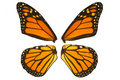Monarch Butterfly Wings Stock Photos - 11061213