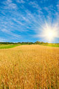 Golden  Ripe Wheat And Sun,blue Sky With Clouds. Royalty Free Stock Images - 11075619
