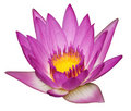 Pink Water Lily Stock Photography - 11079002