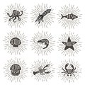 Set Of Vintage Hand Drawn Sea Animals With Sun Rays. Royalty Free Stock Images - 110773109