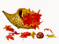 Autumn Leaves Royalty Free Stock Image - 11095136