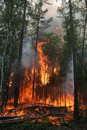 Forest Fire Stock Photography - 1117362