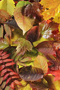 Autumn Leaves Stock Images - 11101084