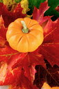 Pumpkin And Maple Leaves Stock Photo - 11138790