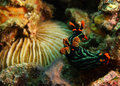 Two Nudibranch Stock Image - 11142281