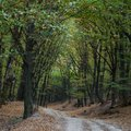 Road In The Forest During Autumn Stock Photography - 111400972