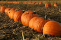 Pumpkins Royalty Free Stock Photography - 11198937