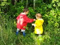 Cute Toddlers Picking Forest Berries Stock Photography - 111909312