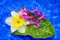 Spring Composition. Stock Image - 11211331